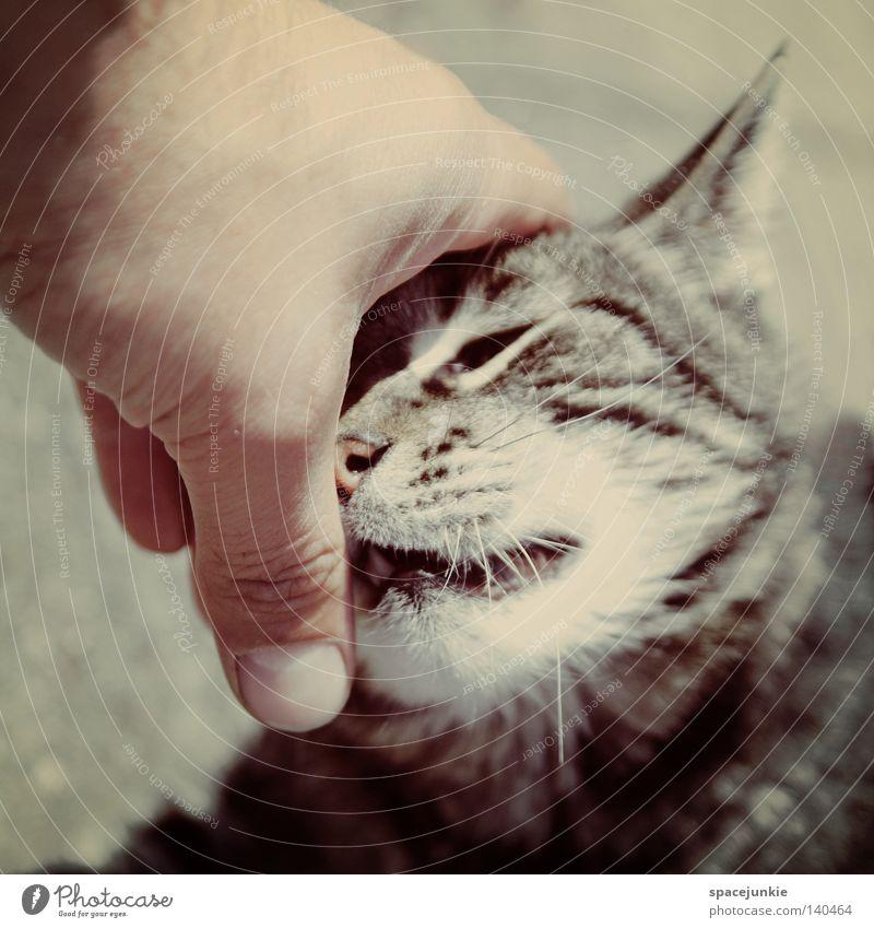 lovely cat Katze Hauskatze Tier Haustier Schwarzweißfoto Schnurrhaar Tierporträt beobachten Fell Streifen Hand Finger berühren Freude animal tierisch