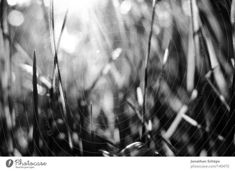 das schöne gras ruhig Sonne Natur Gras Wiese Hügel Wachstum ästhetisch außergewöhnlich dunkel Unendlichkeit hell klein nah trist viele grün schwarz weiß