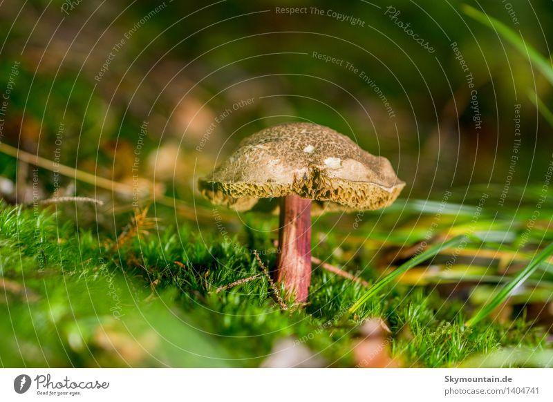 Pilz mit Charakter Natur alt Pflanze rot Tier Wald Umwelt gelb Gras natürlich braun gold Klima einzigartig Schönes Wetter Umweltschutz