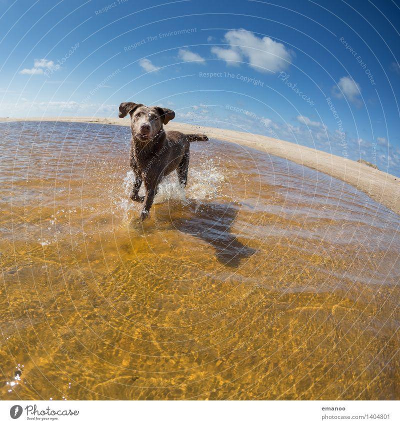 Wasserratte Freude Ferien & Urlaub & Reisen Freiheit Sommer Sommerurlaub Sonne Strand Meer Himmel Horizont Wellen Küste Tier Haustier Hund 1 laufen rennen nass