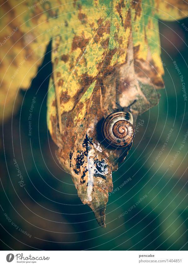 das letzte blatt Herbst Blatt Wald Tier Schnecke Zeichen Vergänglichkeit Schneckenhaus mehrfarbig feucht Herbstlaub Farbfoto Außenaufnahme Nahaufnahme