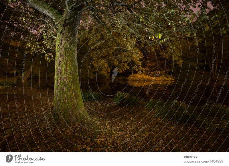 Baum Nachts am See Ferien & Urlaub & Reisen Natur Landschaft Pflanze Wasser Herbst Blatt Park Wald dunkel kalt natürlich stark grün Waldsee Freiburg im Breisgau