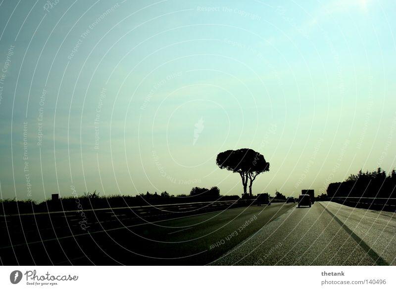 Ruhe Baum ruhig Straße PKW Geschwindigkeit KFZ Autobahn Eile Schnellstraße