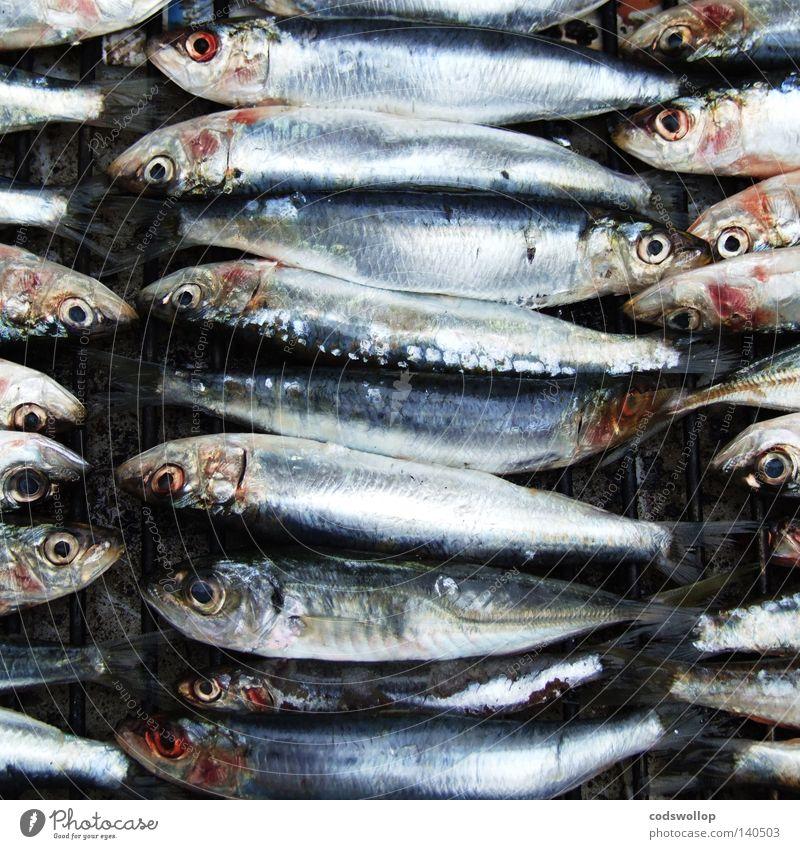 sardines au barbecue Grill Sardinen Ernährung Küche Freizeit & Hobby fish BBQ cooking heads tails Fisch