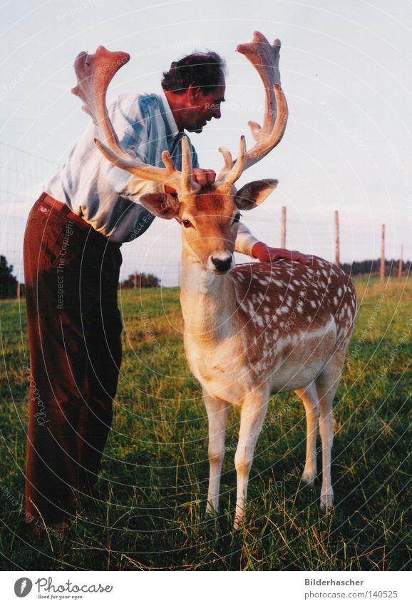 Streicheleinheiten Mensch Tier Wiese Freizeit & Hobby Wildtier Säugetier Horn Hirsche Schaufel Beruf Wildpark Damwild Züchter