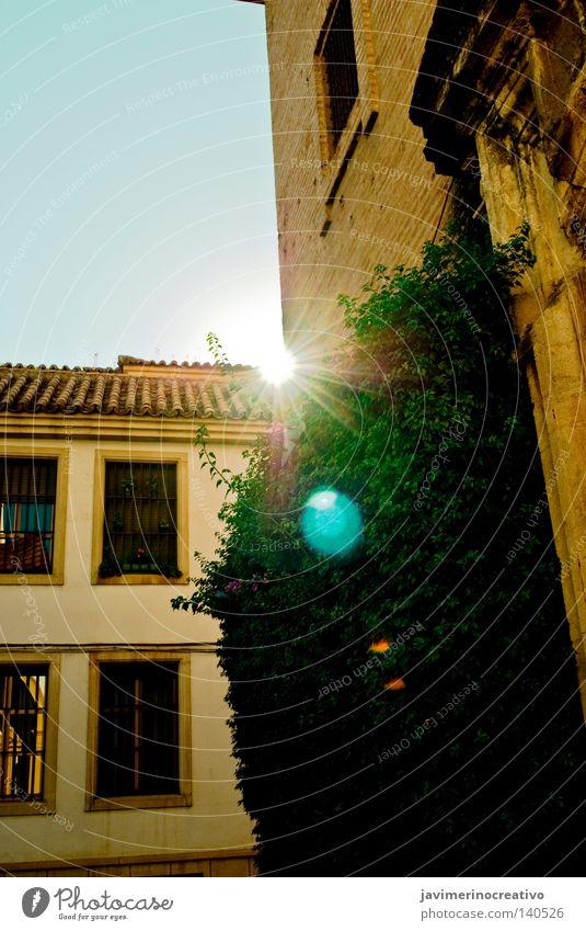 Celestial Pflanze Straße Gesichtsausdruck blau Cordoba Stadt Verkehrswege andalusisch du Paseo Spiegel verde Kuscheltier rincón rayo hiedra ventana fachada