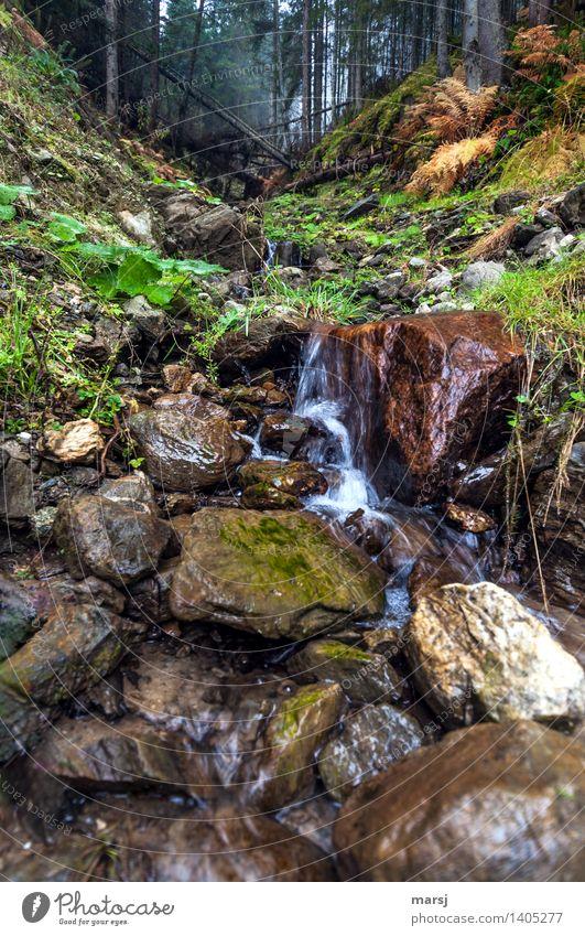 Erfrischend Herbst Wald Bach Wasserfall Wildbach Erfolg Erfrischung Naturliebe Farbfoto Gedeckte Farben Außenaufnahme Menschenleer Textfreiraum oben Morgen Tag
