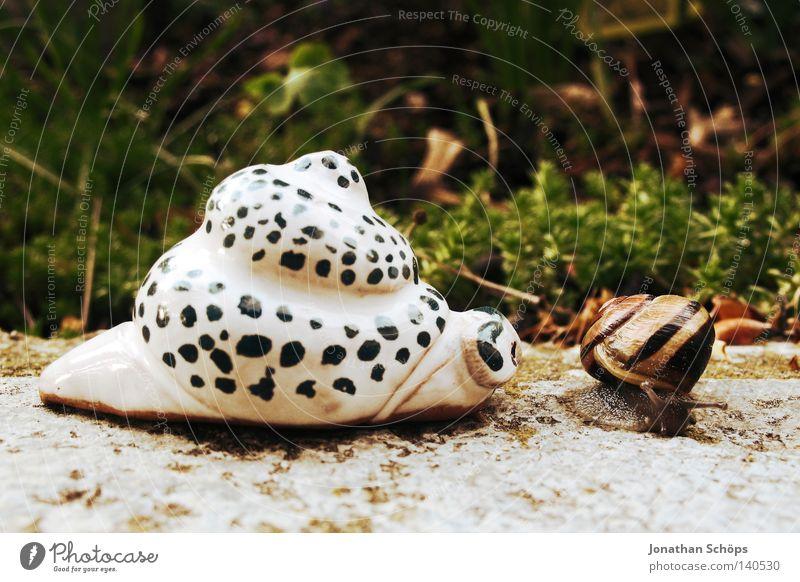 na hallo mein schneckchen ;) Freude Tier Haus Leben Garten klein lustig 2 Tierpaar paarweise authentisch Kreis Streifen Kommunizieren nah berühren