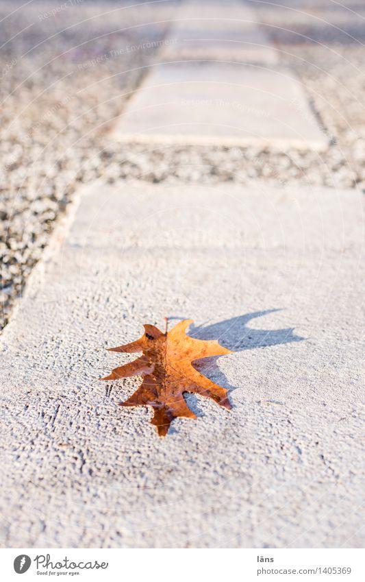 geradewegs Blatt Herbst Straße Linie Schilder & Markierungen Eichenblatt Sonne Sonnenstrahlen