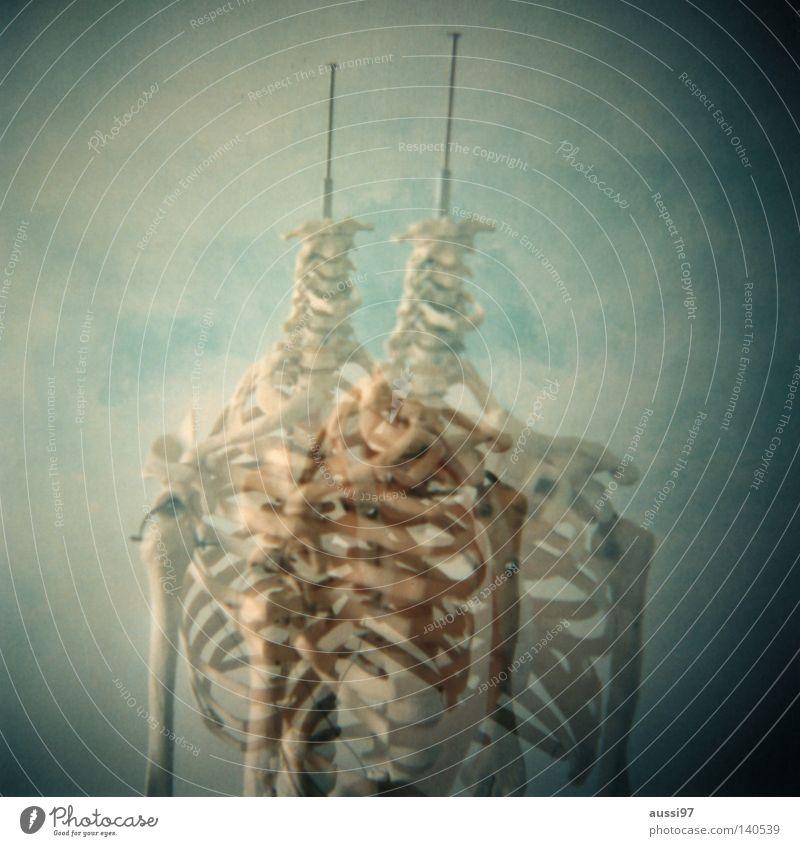 Obere Extremität Doppelbelichtung Italien Skelett Ossis Arzt Anatomie Rippen Brustkorb Speichen Finger Hand analog Mittelformat Wissenschaften Lomografie