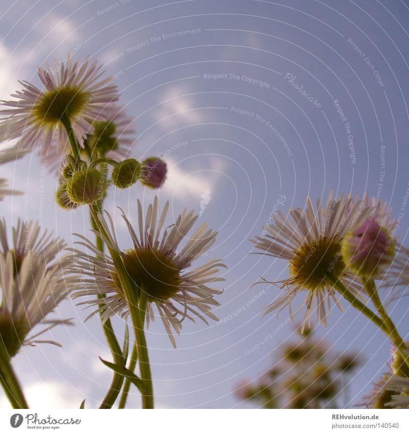 geblüm Natur Himmel Blume Pflanze Sommer Wolken kalt Wiese Blüte Gras Regen Gesundheit hoch frisch Wachstum authentisch