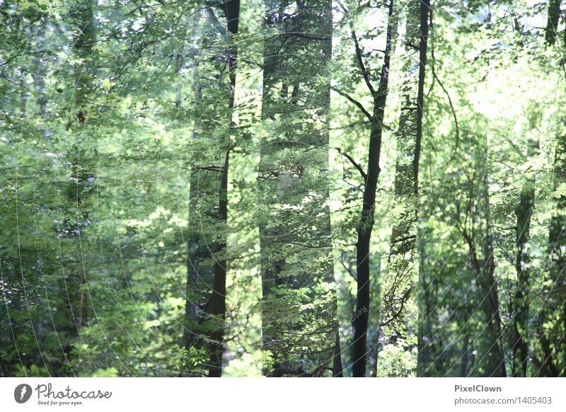 Wald Alternativmedizin Wellness harmonisch ruhig Meditation Ferien & Urlaub & Reisen Sommer wandern Landwirtschaft Forstwirtschaft Kunst Natur Landschaft