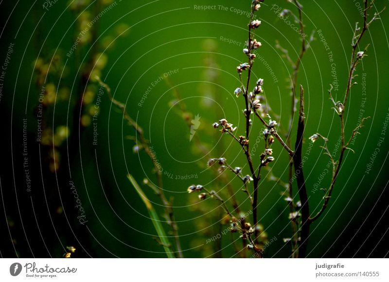 Wiese Natur grün Pflanze Sommer Farbe dunkel Wiese Gras Wärme Umwelt Wachstum Physik zart fein gedeihen