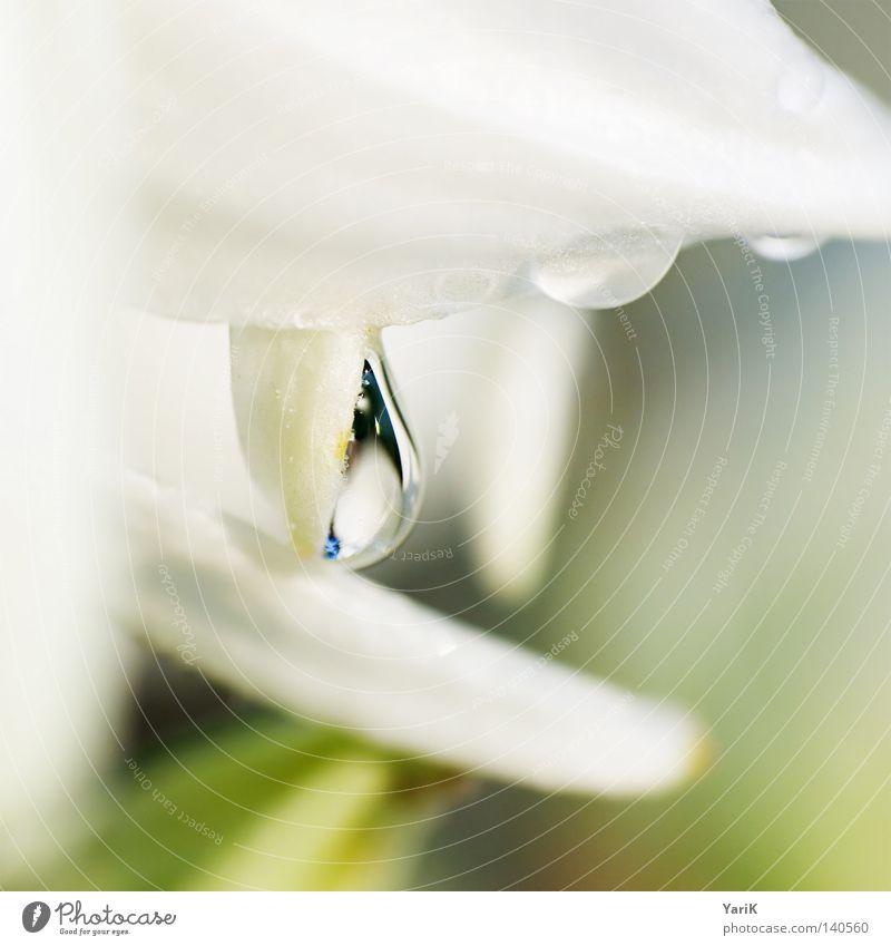 hold Regen Wassertropfen feucht nass grün weiß Pflanze Reflexion & Spiegelung durchsichtig Makroaufnahme Unschärfe Format Quadrat Nahaufnahme Tau Seil hell