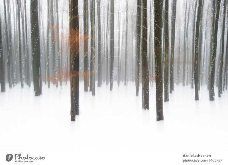 Winterwald Schnee Eis Frost Baum Wald kalt schwarz weiß Einsamkeit Gedeckte Farben Außenaufnahme abstrakt Menschenleer Textfreiraum unten Bewegungsunschärfe