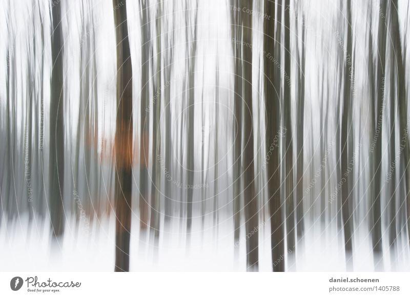 Winter, verwackelt Natur weiß Baum Einsamkeit Wald schwarz Wege & Pfade Bewegung braun Eis wandern ästhetisch fantastisch Frost bizarr