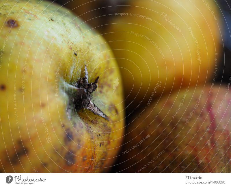 frisch vom Baum natürlich Gesundheit Lebensmittel Bioprodukte Apfel nachhaltig Vegetarische Ernährung
