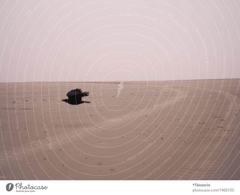 Hitchcock-Feeling Landschaft Küste Strand Nordsee Tier Wildtier Vogel Krähe 1 Farbfoto Gedeckte Farben Außenaufnahme Menschenleer Tag Starke Tiefenschärfe