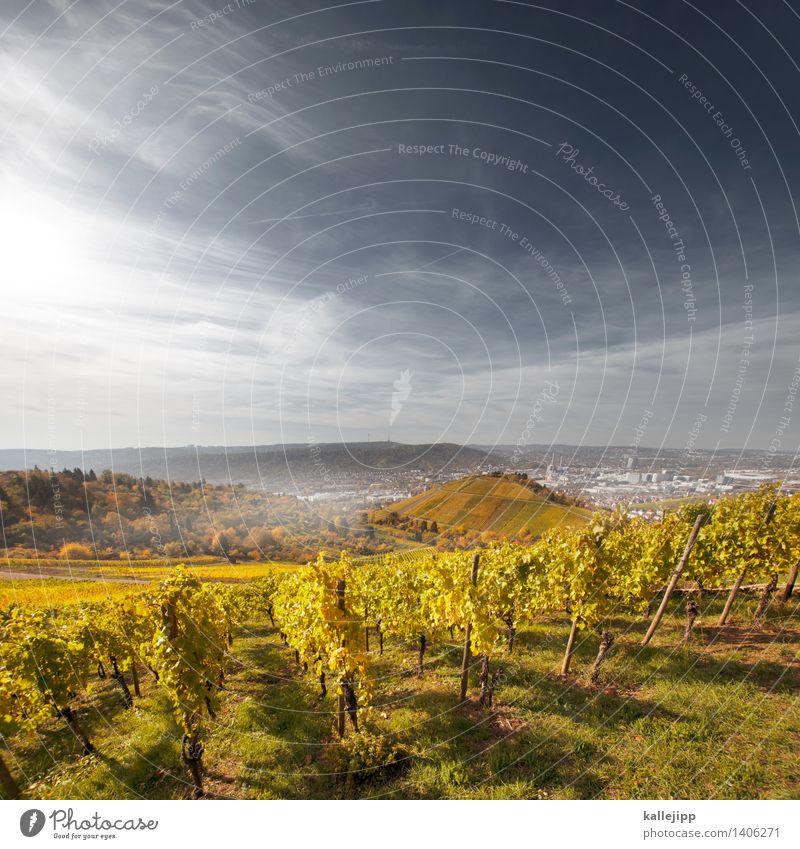 my heart is a benztown Wein Umwelt Natur Himmel Wolken Herbst Klima Nebel Pflanze Blatt Nutzpflanze Garten Feld Hügel Stadt Stadtrand bevölkert Haus blau braun