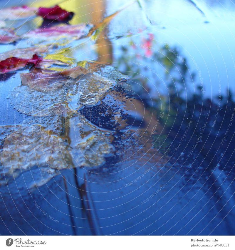 es gab regen Regen Wassertropfen Tropfen schlechtes Wetter Meteorologie Reflexion & Spiegelung Stimmung feucht nass Rose Blatt Blüte Blütenblatt Himmel blau