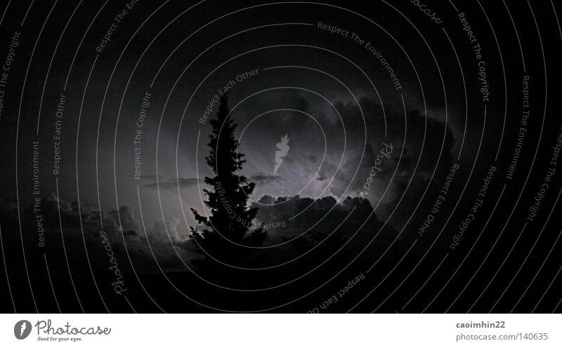 the awakening Baum Tanne Wolken Nacht dunkel Licht Schwarzweißfoto schimmern Beleuchtung Abend Kumulus Wald Himmel Abenddämmerung Lichtstrahl Wolkengruppe
