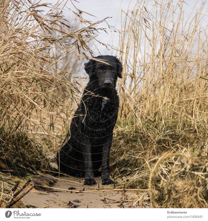 Im Fokus Natur Landschaft Herbst Winter Seeufer Strand Bucht Tier Haustier Hund Retriever 1 beobachten sitzen schwarz Tierliebe Wachsamkeit ruhig