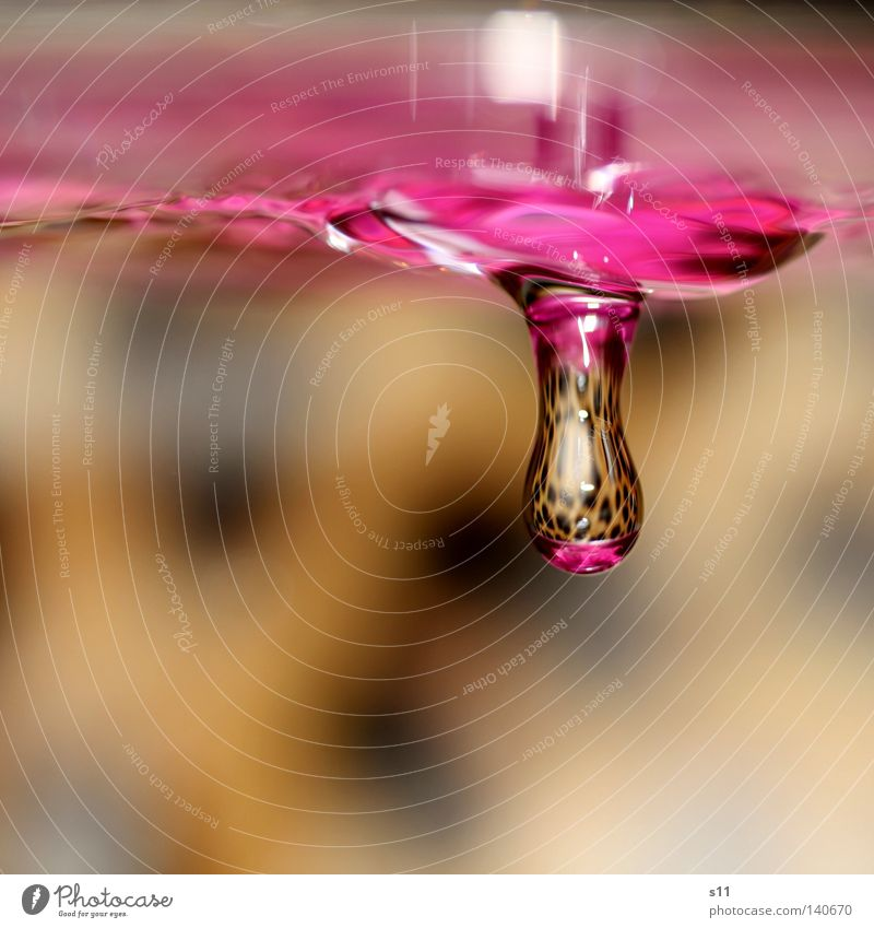 hanging hängen rosa Leopard Hintergrundbild Spiegel durchsichtig Vogelperspektive Makroaufnahme Nahaufnahme das Hängen Wasser Wassertropfen nass feucht Drop