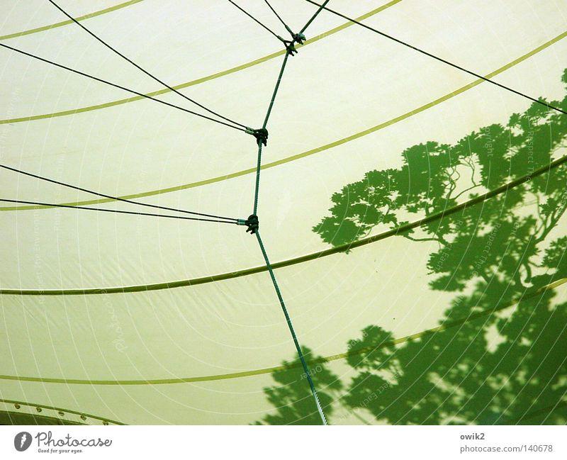 Blätterdach Baum Blatt Kunst Zufriedenheit Hintergrundbild Seil Sicherheit Dach Kultur Show Ast Kunststoff Club Konzert Verbindung Bühne