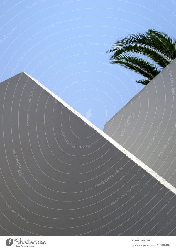 Fetakäse Treppe Griechenland Stein weiß Geometrie Palme grün Sommer Ferien & Urlaub & Reisen aufsteigen Goldener Schnitt blau Himmel Schönes Wetter Erholung