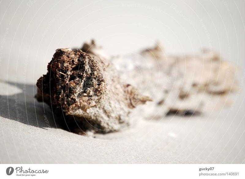 Holzwurm Treibholz Strandgut Baumstamm Sand Meer Schatten Nordsee Baumrinde geschätzt Ebbe Flut Wassermassen zerkratzen Verzerrung verkratzt verkrüppelt