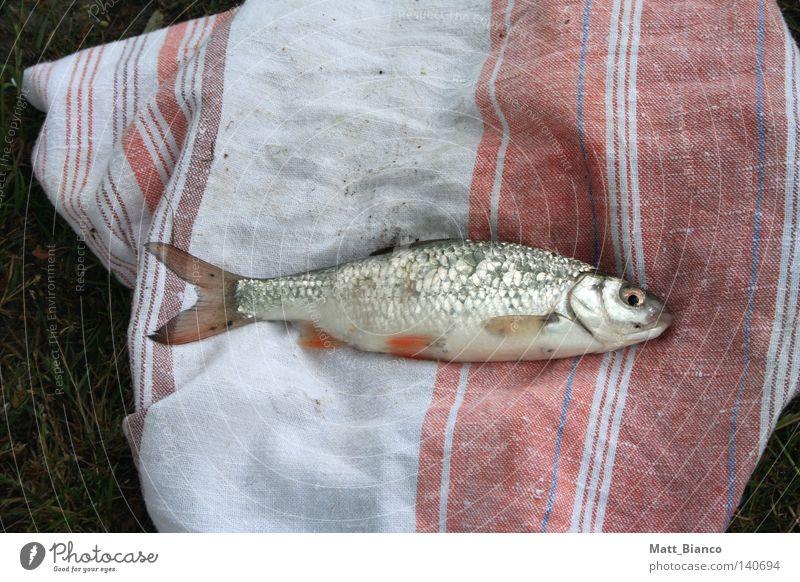 fisch auf tuch Natur Fisch Angeln Scheune Gewässer Fischauge Handtuch Küchenhandtücher