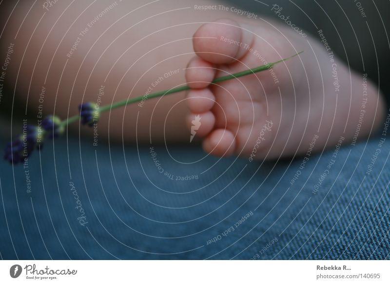 Barfuß Mensch Blume Fuß Baby Jeanshose Kleinkind Kind Zehen Lavendel Gliedmaßen Heilpflanzen