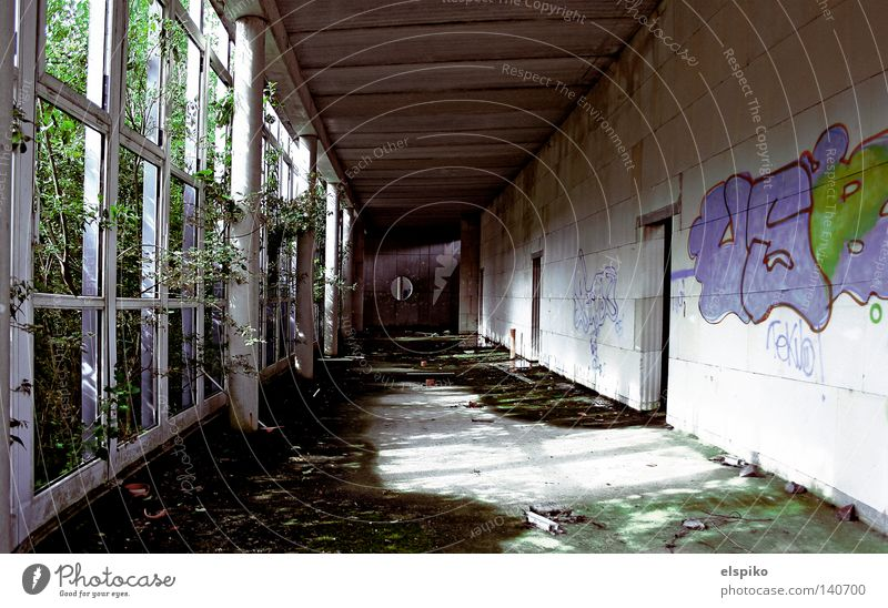 Industrieleichen 2 (Innengang) Haus Gebäude Baustelle bewachsen dunkel Tod Etage Licht Mauer Wand Graffiti Fenster Gang Durchgang Decke Bodenbelag Beton