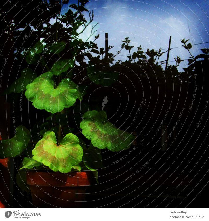 schattendasein Reflexion & Spiegelung Zimmerpflanze Küche Dekoration & Verzierung window conservatory Schatten greenhouse shadow hedge reflection Fenster