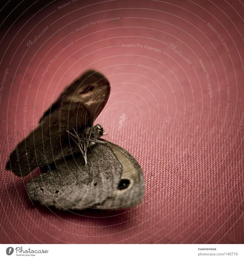 rot Tod Traurigkeit Trauer Flügel Schmetterling Verzweiflung Abenddämmerung verlieren Weste Motte