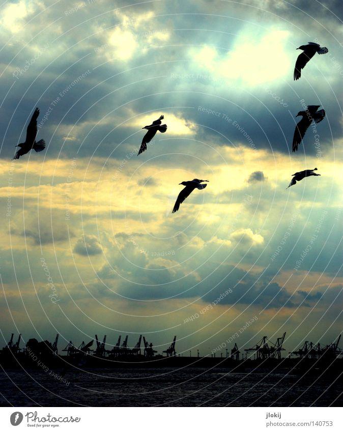 HHHafen Hamburg Elbe Kran Möwe Vogel Flügel Sonne Wolken Gewitterwolken Abenddämmerung Sommernacht Wellen Wasser Wasserstraße Wolkenformation Schifffahrt Himmel
