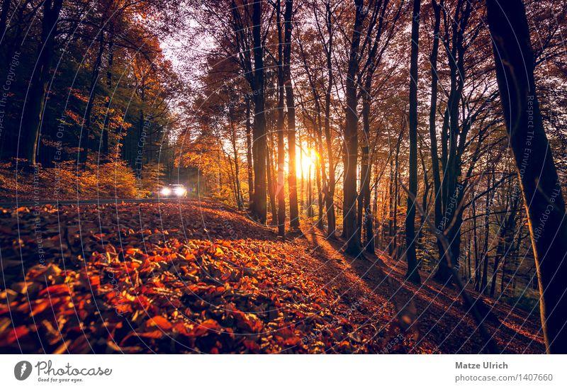 Herbstsonne im Wald Umwelt Natur Sonne Sonnenaufgang Sonnenuntergang Sonnenlicht Schönes Wetter Baum Blatt Herbstlaub Autofahren Fahrzeug PKW schön Wärme Straße