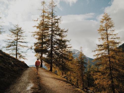 Lärchenwanderung Jugendliche blau Baum Junger Mann maskulin wandern Fitness Neugier Reinheit