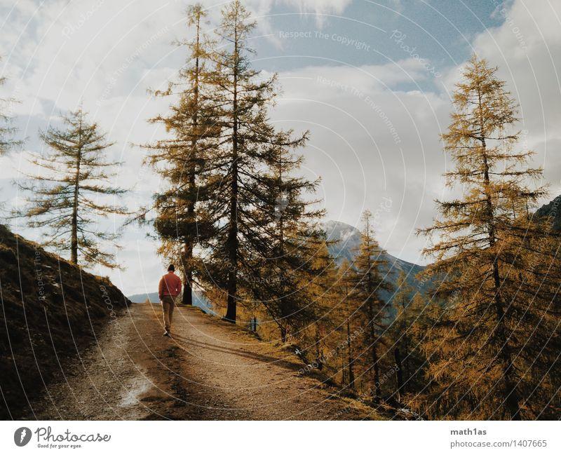 Lärchenwanderung maskulin Junger Mann Jugendliche Baum wandern blau Reinheit Fitness Neugier Farbfoto Außenaufnahme Gegenlicht
