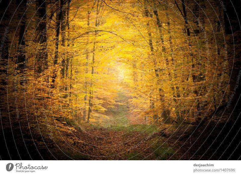 Herbststimmung Freude Wohlgefühl wandern Landwirtschaft Forstwirtschaft Natur Sonnenlicht Schönes Wetter Baum Wald Bayern Deutschland Menschenleer Holz