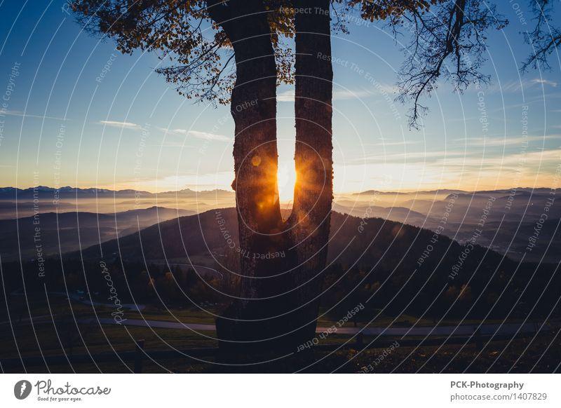 Baumlicht Natur Landschaft Himmel Horizont Sonne Sonnenaufgang Sonnenuntergang Sonnenlicht Frühling Herbst Alpen Sehnsucht Lichtschein Sonnenstrahlen gold