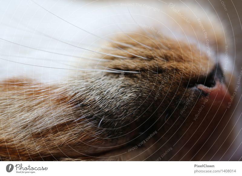 schlafende Katze Tier Haustier Tiergesicht Fell Krallen 1 niedlich braun Tierliebe Farbfoto Nahaufnahme