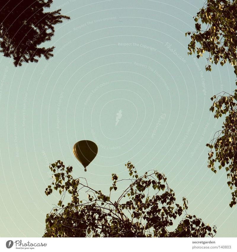 leichter als luft. Ballone Luft retro Sträucher Baum träumen schimmern glänzend Wunsch Zufriedenheit Wind Pilot brechen aufsteigen hoch Absturz schön elegant