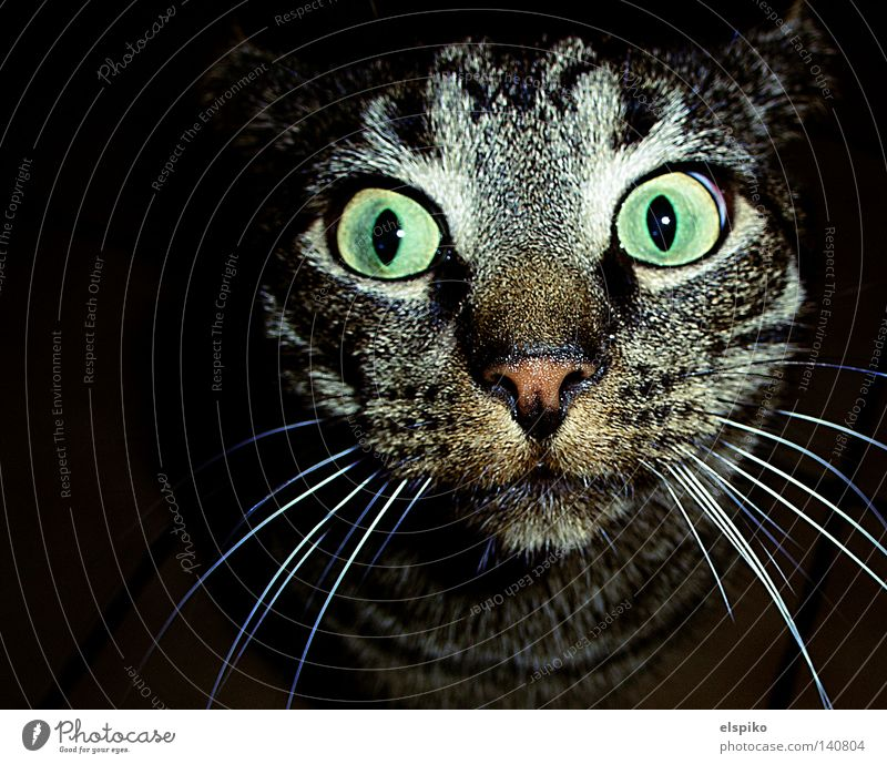 Wat? Schon wieder? Katze Hauskatze Tier Fell Blick entdecken gefangen Überraschung dumm Säugetier Makroaufnahme Nahaufnahme getigert