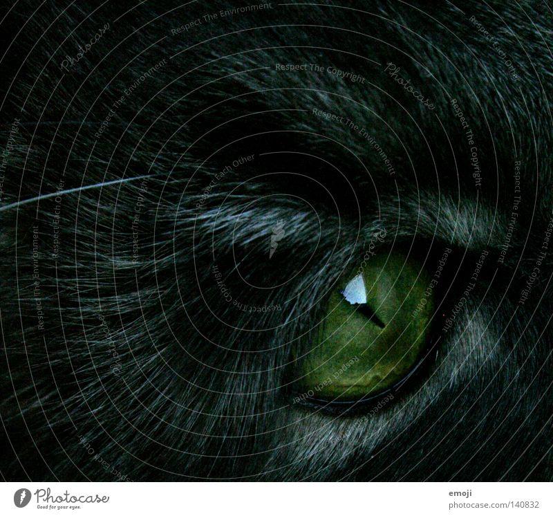 cat eye Katze Tier schwarz Auge Fell nah böse Haustier Säugetier schwarzhaarig Hauskatze unheimlich Katzenauge Starrer Blick Schlitzauge