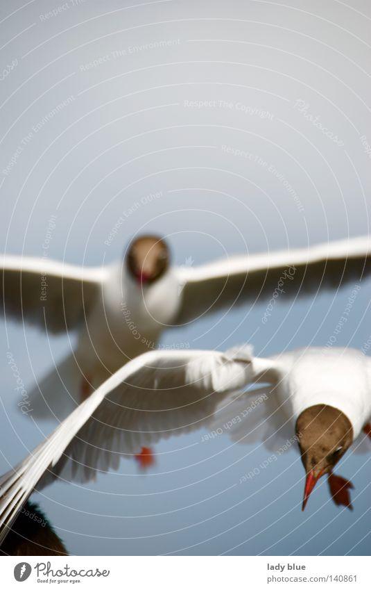 Was`n da? Himmel Natur blau Sommer Strand Meer Ferien & Urlaub & Reisen Haare & Frisuren Vogel fliegen Luftverkehr Feder nah berühren Sturm Möwe