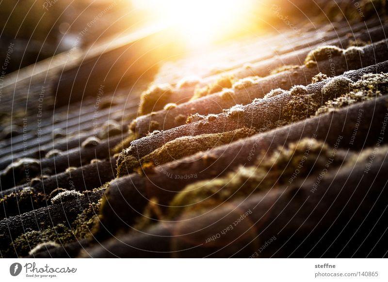 Ein neuer Tag bricht an Sonne Winter Haus kalt Beleuchtung Frost Dach Häusliches Leben Sonnenaufgang Moos Himmelskörper & Weltall aufstehen aufgehen