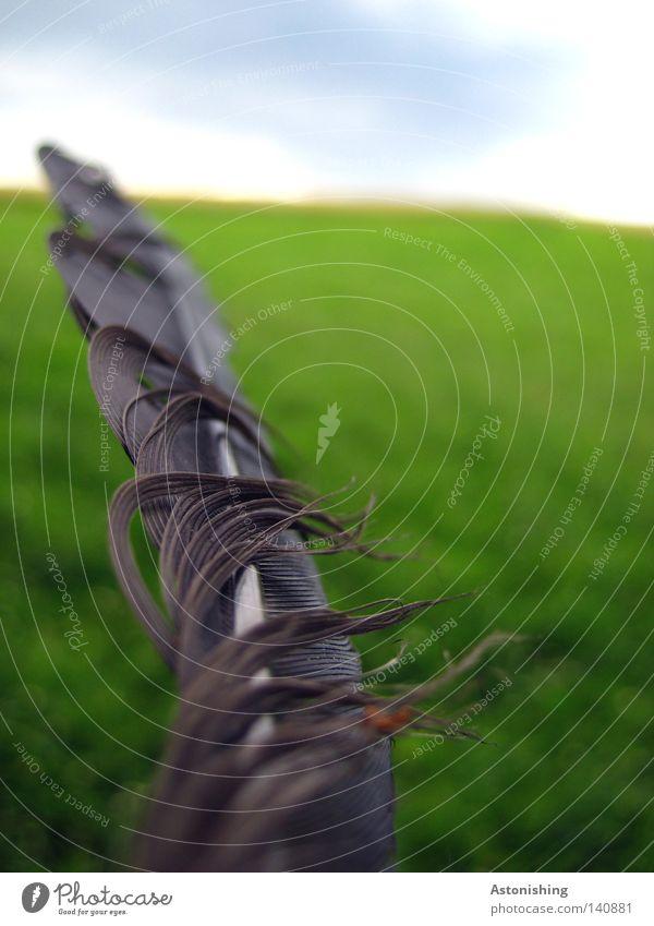 Federleicht Natur Himmel grün blau schwarz Wiese Landschaft Horizont Feder leicht Kiel Landschaftsformen flattern zerzaust Windböe