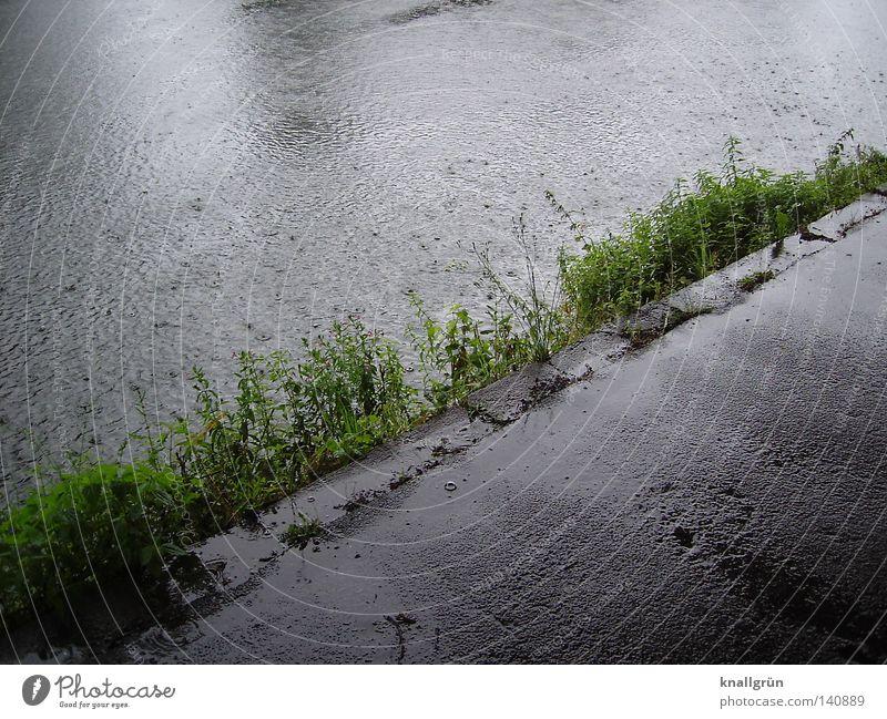 Sonntagmorgen Wasser Pflanze Sommer grau Wege & Pfade Regen glänzend Wassertropfen nass Fluss Asphalt feucht diagonal Bach Luftblase Flussufer