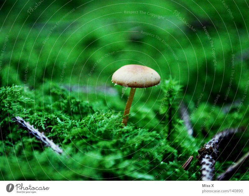 Ein Männlein steht im Walde Farbfoto Außenaufnahme Regen Baum Gras Moos Farn Moor Sumpf nass grün Pilz Echte Farne Waldboden Zweige u. Äste Geäst Boden feucht